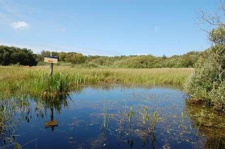 Natuurreservaat Zwanenwater